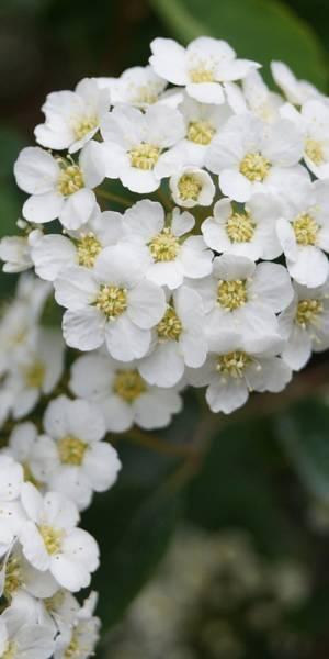biancospino-sensation-avellino